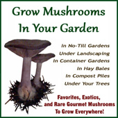 Grow Mushrooms In Your Garden