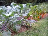 DSCF0148 Fall Gardening