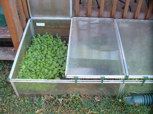 Building and Using Cold Frames in the Backyard Garden Veggie