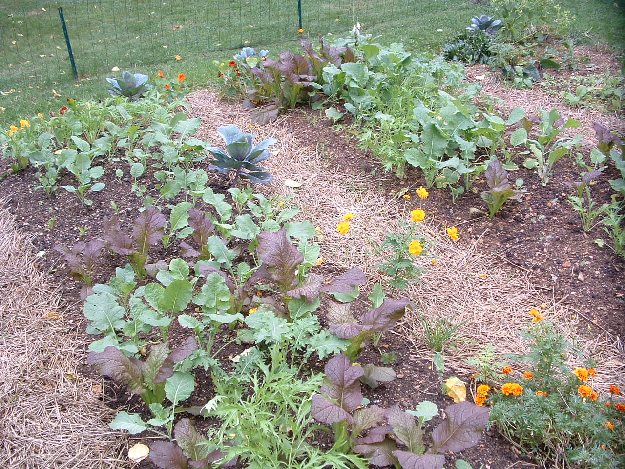 Small space gardens veggie gardening tips for A small garden