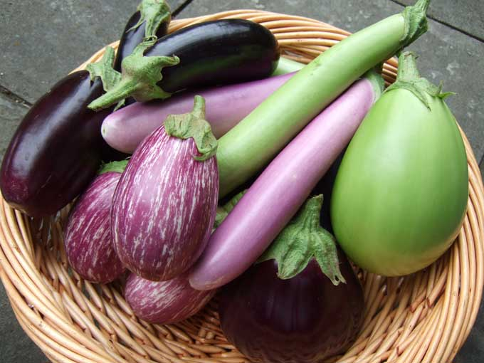 Potluck eggplant recipes