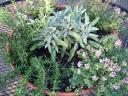 sage rosemary and thymes.thumbnail Window Box Veggies