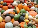 pumpkins squash gourds.thumbnail The Gardeners Landscape   Autumn has Arrived