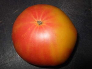 bi color heirloom tomato 300x225 Grow Heirloom Tomatoes for an Interesting Change