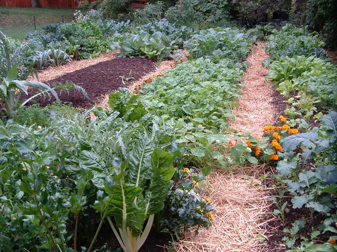 Extreme makeovers for awesome fall vegetable gardens for Vegetable garden