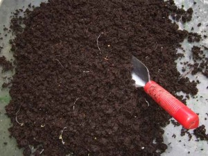 worm castings 300x225 Worm Farming: Livestock for the Home Gardener