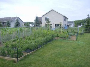 PJs Garden 300x223 The Joys of Growing a New Vegetable Garden
