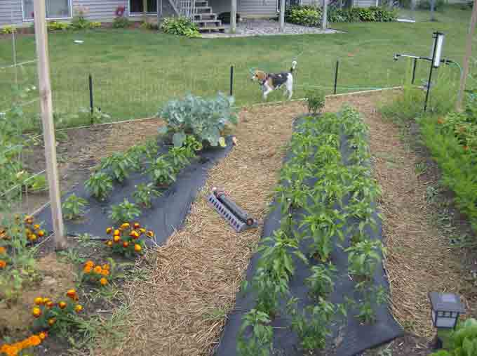 Vegetable Garden Tips And Ideas Part - 29: Counting The Failures And Successes Of A New Vegetable Garden
