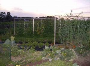Garden Trellises 300x223 Vertical Supports for Trellising Vegetables