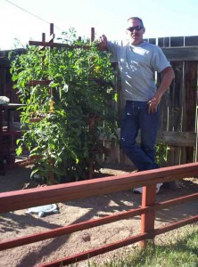 John and Tomato Trellis 222x300 Another Trellis Design for the Veggie Garden