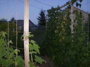 Trellis Close Up Photo 300x223 Vertical Supports for Trellising Vegetables