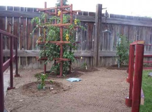 Wooden Trellis 300x222 Another Trellis Design for the Veggie Garden