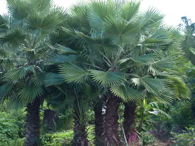 Coconut Trees Getting Back to the Business of Garden Blogging