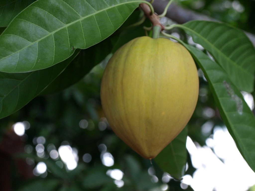 PB181615 1024x768 How Good are You at Identifying Tropical Fruits?