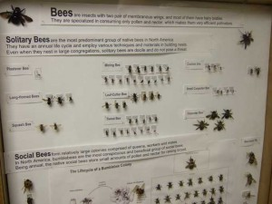 Bee Display 300x225 Winter Meeting Focuses on Native Bees and Fruit