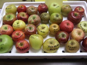 Heirloom Apples 300x225 Interesting Apple Facts from the Fruit Expert