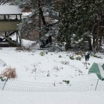 Snow Covered Garden 150x150 Gardening Ideas to Chase Away Winter Blues