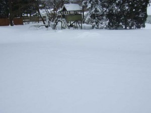 Snow Covered Garden 300x225 Green Diversions from a White Landscape