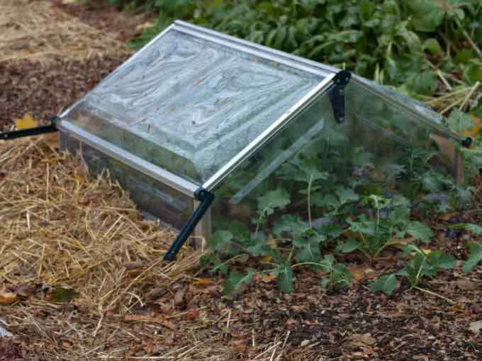 Cold Frame Blanketing the Garden for a Long Winters Slumber