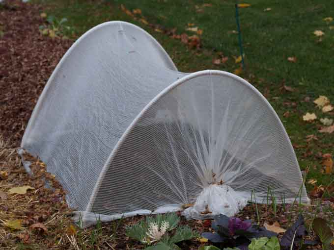 Vegetable garden cover for winter protection veggie - Cover crops for vegetable gardens ...