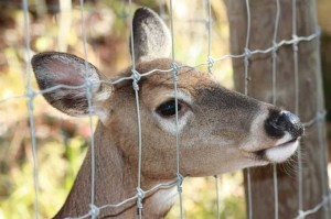 Wildlife Fenced Out 300x199 Garden Fences: Keeping Wildlife on the Outs