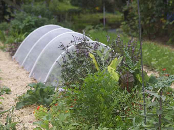 Garden Tunnel Photos from the Fall Vegetable Garden
