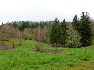 Hoyt Arboretum 300x225 The Grass Really is Greener in Portland, Oregon