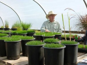 Research inside Greenhouse 300x225 A Visit with Pennington: The Grass Seed People