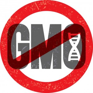 No GMO Logo 300x300 Proposition 37 Fights to Label GMO's in Food Supply