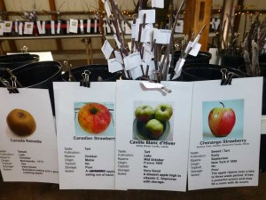 Apple Varieties 300x225 The Backyard Fruit Growers Host another Grafting Workshop