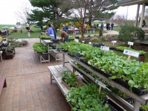 Cold Crop Plant Sale 300x225 Its the Season for Plant Sales and Herb Festivals