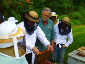 Beekeeping Workshop 300x225 Perfect Weather for a Weekend in the Vegetable Garden