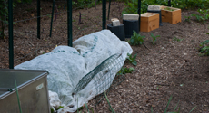 Garden Frost Protection