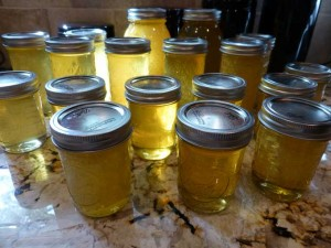 Harvested Honey