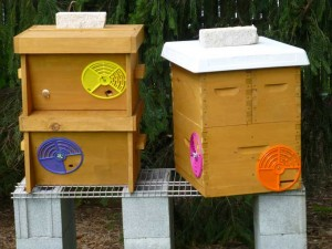 Nucleus Hives 300x225 Backyard Beekeeping in the Veggie Gardening Tips Apiary