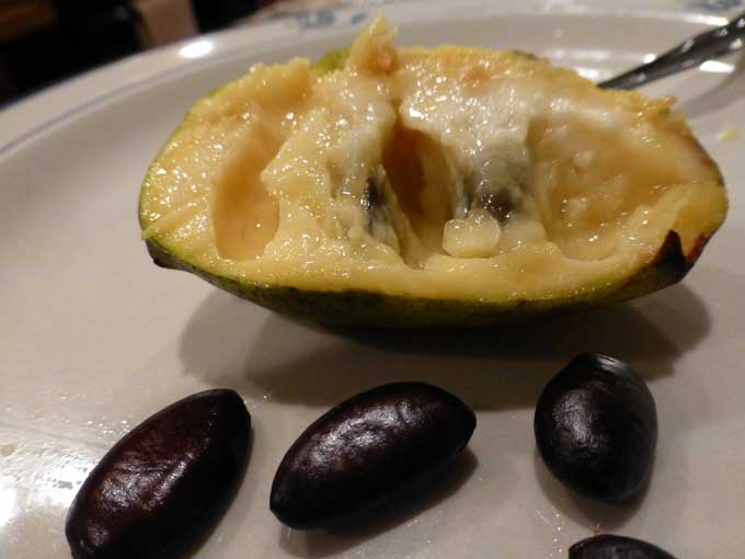 Pawpaw Flesh and Seeds