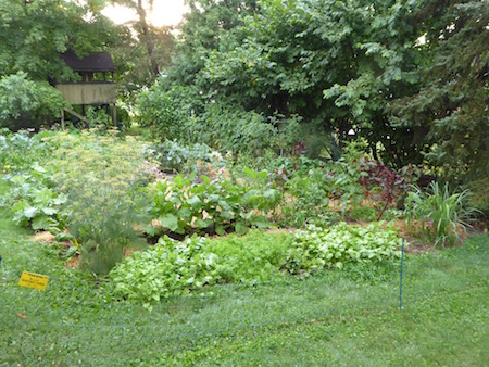 Here s a pictorial tour through the mid summer vegetable garden veggie gardening tips - Summer time gardening tips ...